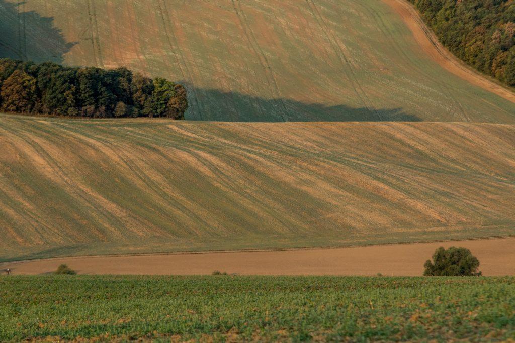 Fotografie pole u Kobeřic u Brna