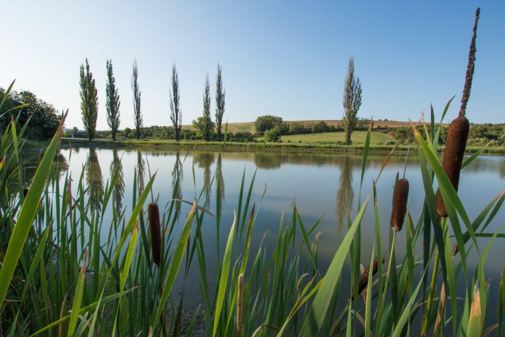 Fotografie rybníka u Kobeřic u Brna